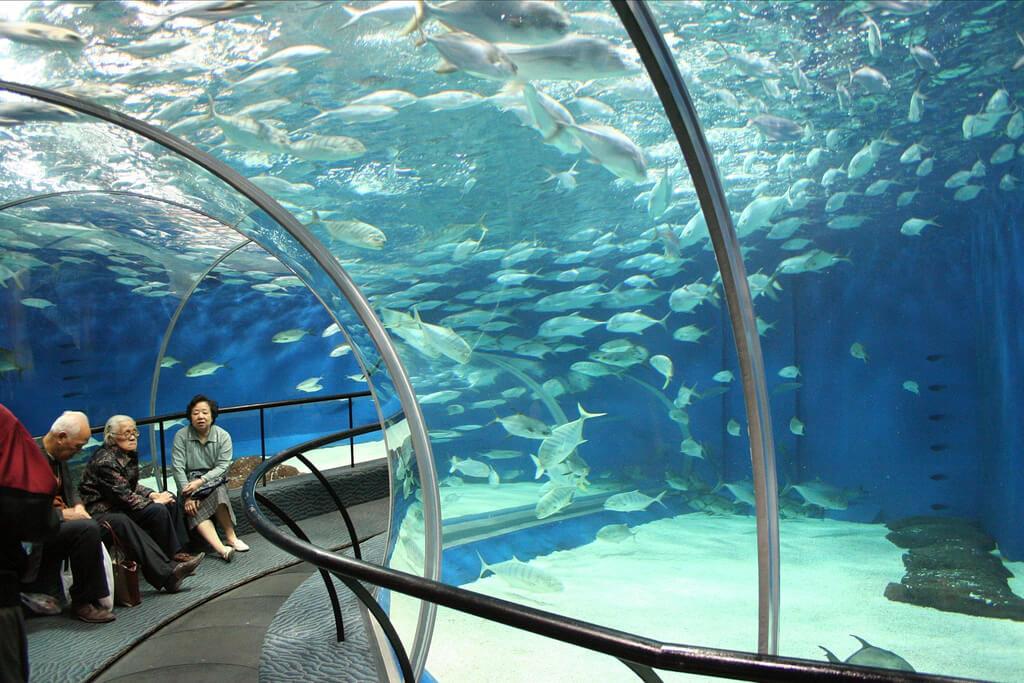 shanghai ocean world